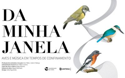 From my window: birds and music in times of confinement (Portuguese only)