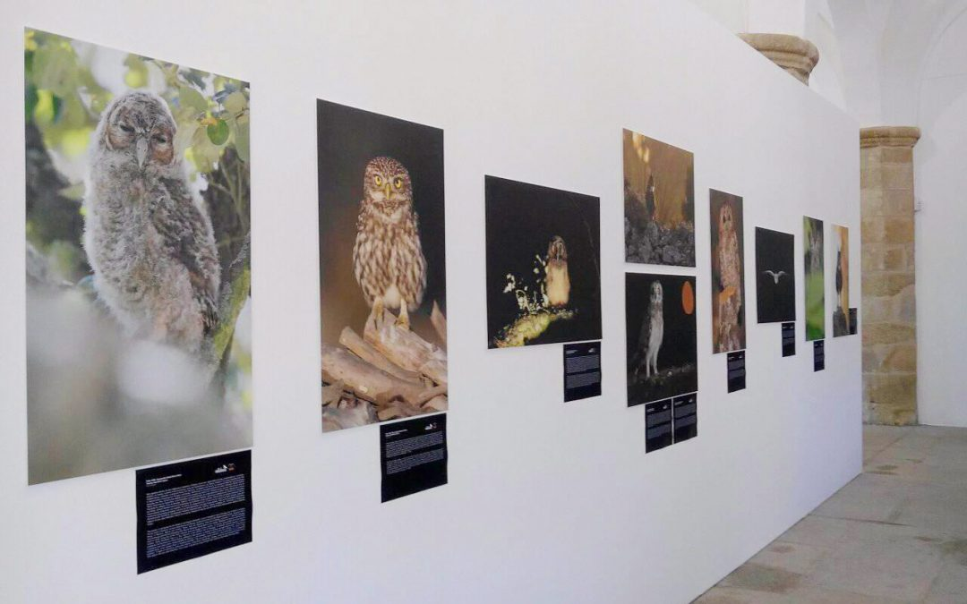 Owls of Portugal