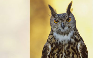 World Owl Conference 2017 – book of abstracts