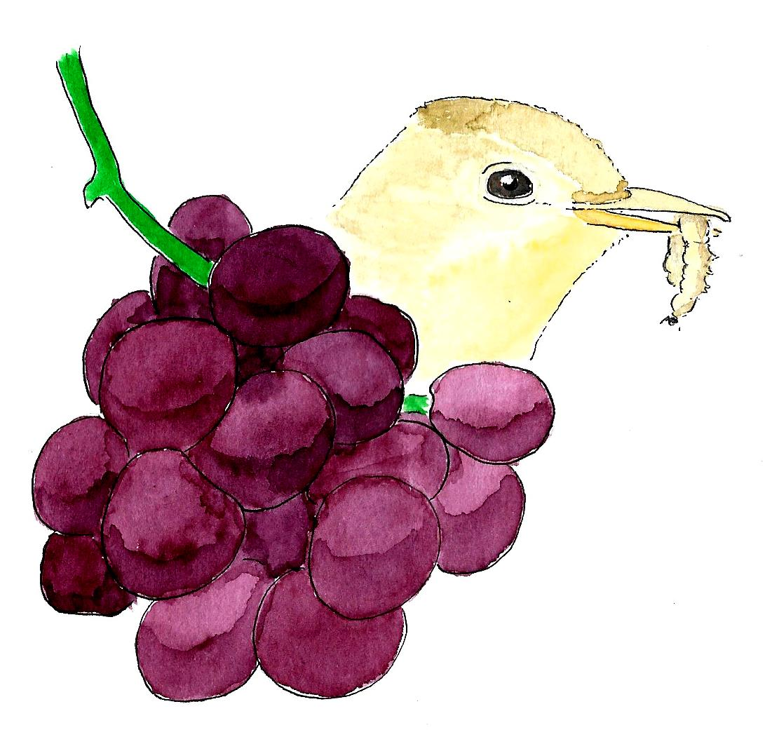 Vineyard characteristics influence the potential of birds as allies in pest control